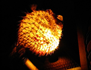 Pufferfish lamp at the Trader Vic's in Munich
