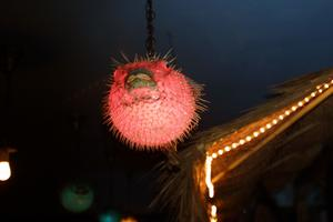 Pufferfish lamp at Otto's Shrunken Head in New York