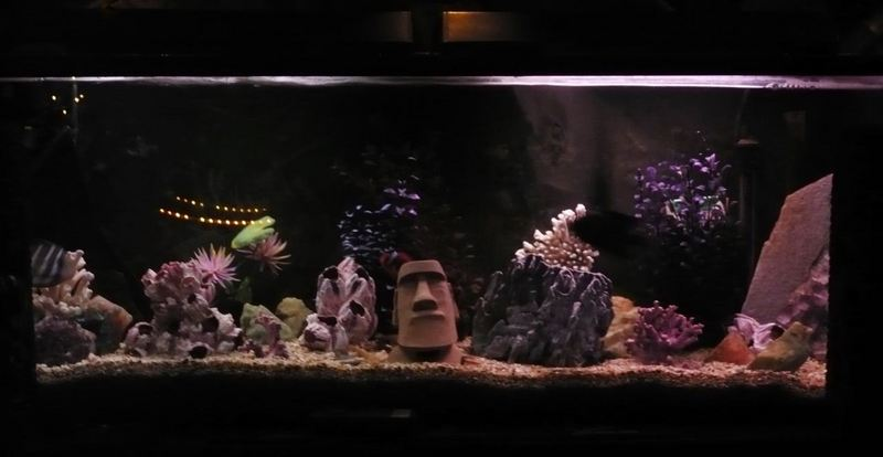Critiki guide to tiki bars polynesian restaurants for Moai fish tank