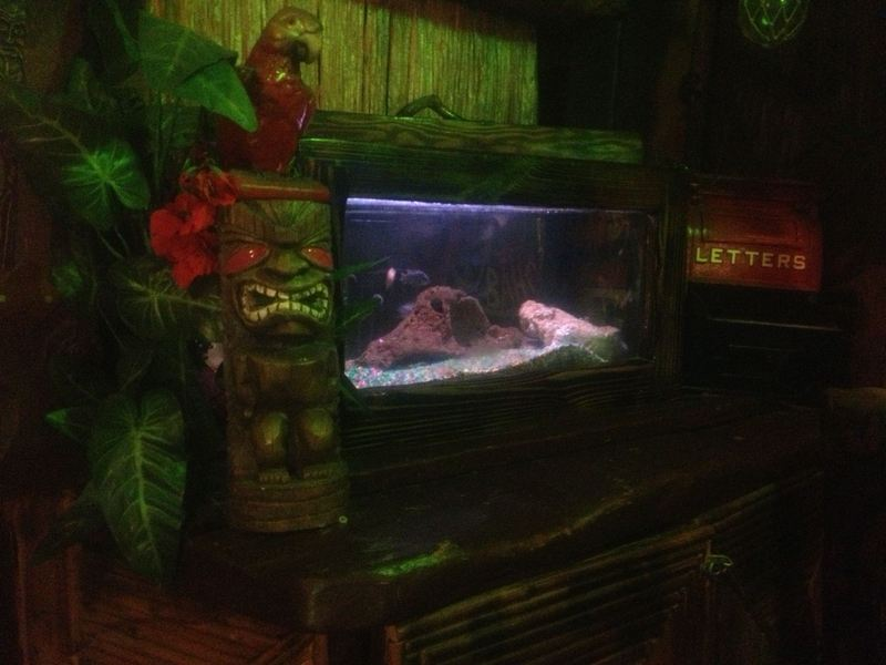 Bahooka ribs grog in rosemead ca critiki for Moai fish tank