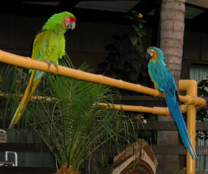 Parrots at Humphrey's Half Moon Inn in San Diego