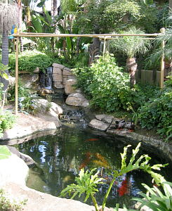 Waterfall and koi pond at Humphrey's Half Moon Inn in San Diego