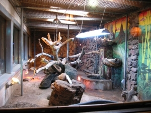 The former parrot room at the Kon Tiki now holds lizards