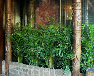 Foliage and tikis at the entrance to Trader Vic's in Dallas