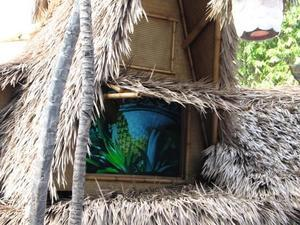 Dole Pineapple video at the Enchanted Tiki Room in Anaheim
