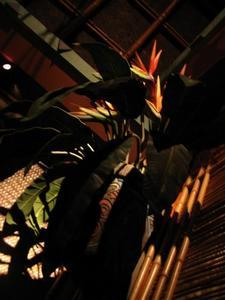 Bird of Paradise at the Enchanted Tiki Room