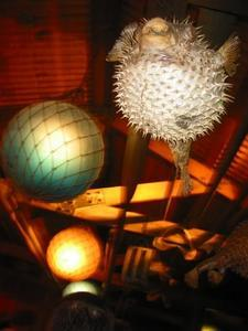 Lamps over bar at Trader Vic's in Atlanta