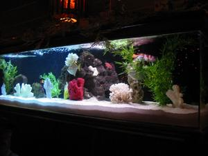 Fish tank at Damon's in Glendale