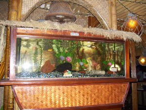 Thatch covered aquarium at La Mariana Sailing Club in Honolulu