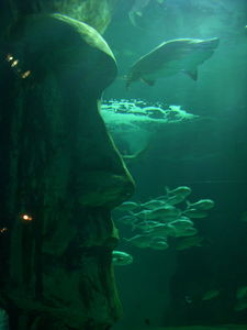 Shark tank moai at London Aquarium in London